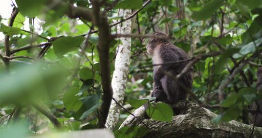 Best Of Taiwan - Monkeys