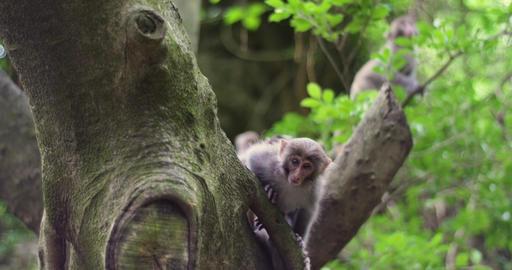 Best Of Taiwan - Monkeys 0