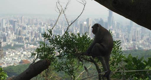 Best Of Taiwan - Monkeys 1