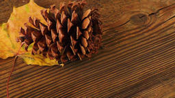 Autumn dry yellow leave and pine cone over wooden background Footage