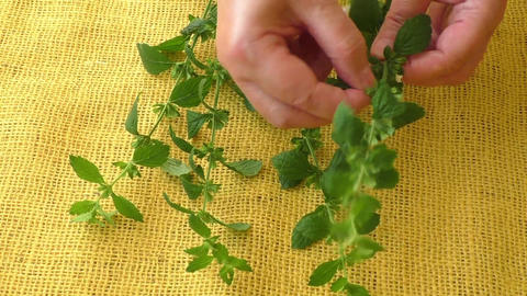 Culinary aromatic herbs. Melissa leaves on a yellow background Footage