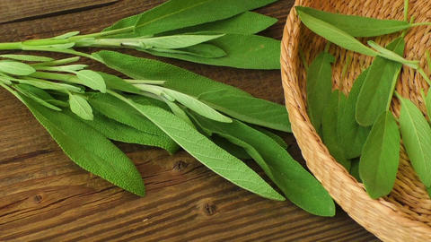 Medical herbs. Fresh sage on wooden table Live Action