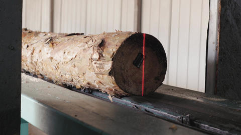 Lumber industry - Pine logs moving through the pipeline GIF