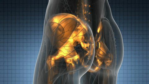 science anatomy of human body in x-ray with glow skeleton bones Footage