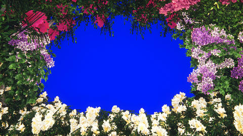 Branches of beautiful tropical plants in the wind. Beautiful summer looped background. VFX animation Animation