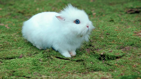 White Little Rabbit on Green Moss Footage