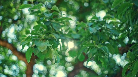 Bokeh Light From the Sun Through the Leaves Footage