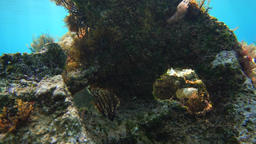Underwater, rock with an eye and fishes in the current Footage