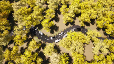 Car traffic Yellow Autumn forest nature road landscape. Beautiful fall nature Live Action