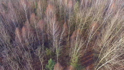 Forest during late autumn time. View from above. Poland Footage