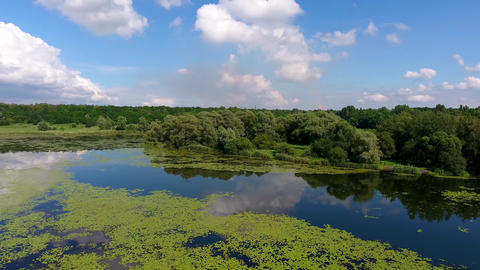 Summer time lake and green forest, white clouds over blue sky in Poland lanscape Footage