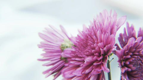 Purple Flowers Rotating on Silvery Background Footage