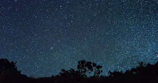 Silhouette of trees against a background of stars. TimeLapse Footage