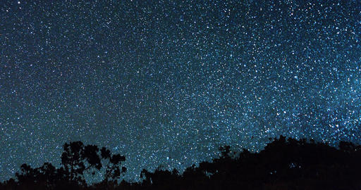 The Milky Way appears from behind the trees. Time Lapse Footage
