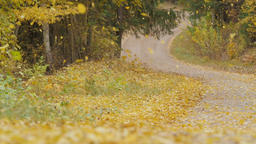 Slow motion of leaves falling on a road Footage