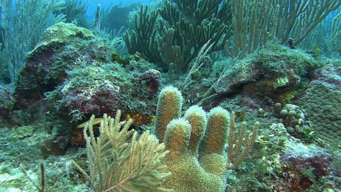 Fish on the reef in Caribbean sea Live Action