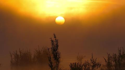 Landscape with sunrise on river in fog, 4k Footage
