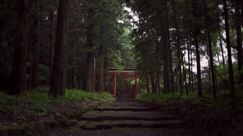 Red torii Footage