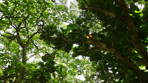 Low angle POV of jungle canopy overhead Stock Video Footage