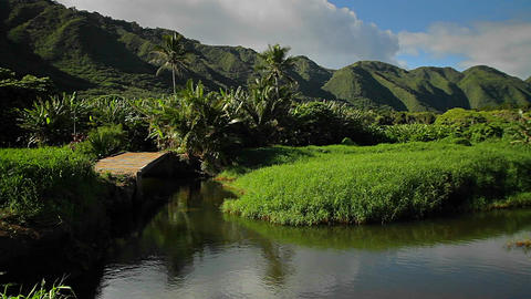 Pan across a Hawaiian jungle landscape with canyon Stock Video Footage