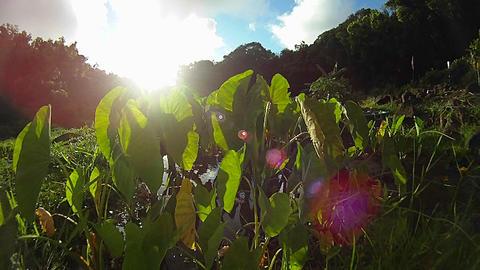 POV shot through green plants Stock Video Footage