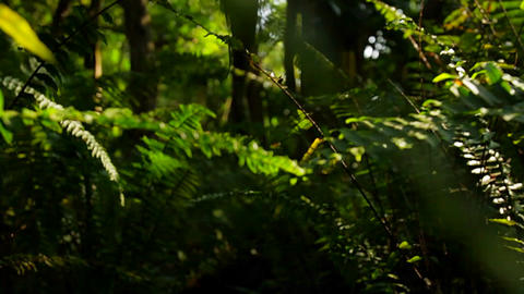 POV shot moving through dense jungle or forest Stock Video Footage