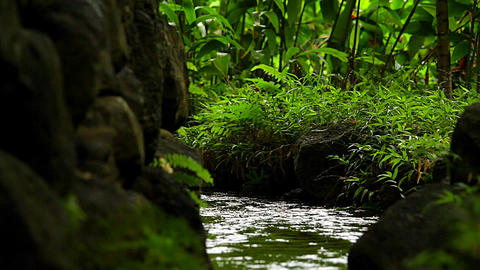 A stream through a tropical forest Footage
