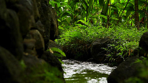 A stream through a tropical forest Stock Video Footage