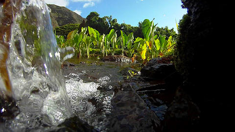 Pure fresh clean water pours down a stream and int Stock Video Footage