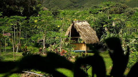 A small native hut in the jungle on a tropical isl Footage