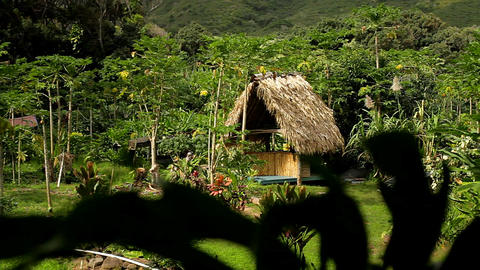 A small native hut in the jungle on a tropical isl Stock Video Footage