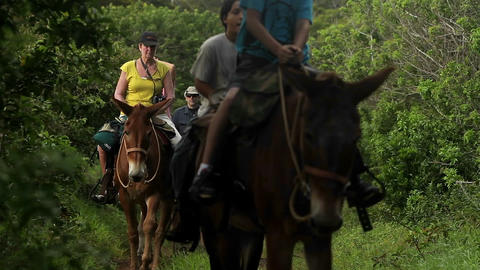 People ride horses along a narrow trail in Hawaii Footage