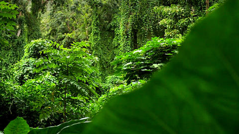 Beautiful moving shot through dense green jungle p Footage