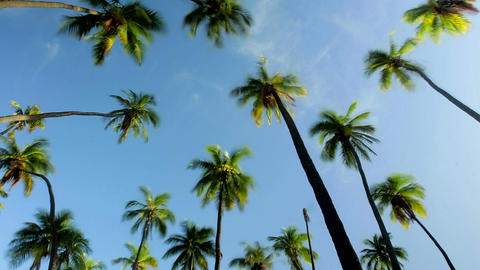 A low angle view of palm trees and clouds Stock Video Footage