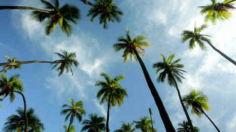 A Low Angle View Of Palm Trees And Clouds stock footage