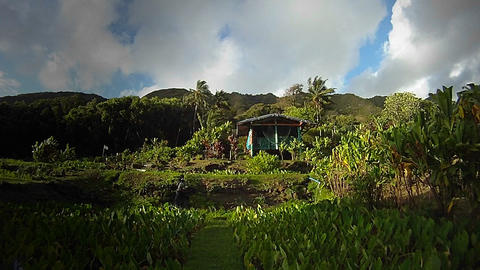 A small hut in a tropical rainforest region Stock Video Footage