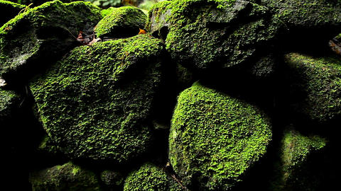 POV moving past rocks and moss and lichen in a rai Stock Video Footage