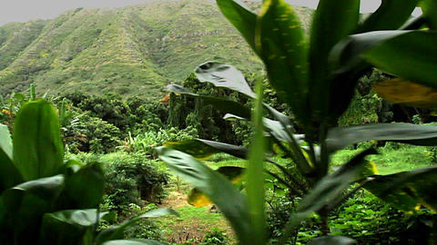POV moving along through green plants and jungle Footage