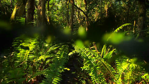 POV moving through a jungle or rainforest Stock Video Footage