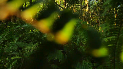 POV moving through a jungle or rainforest Footage