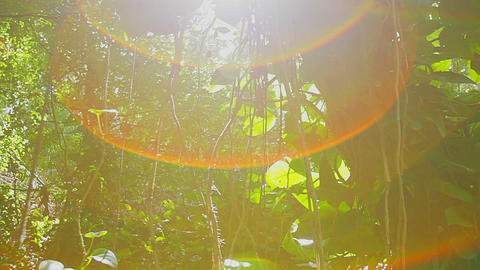 Slow moving shot through dense rainforest with sun Stock Video Footage