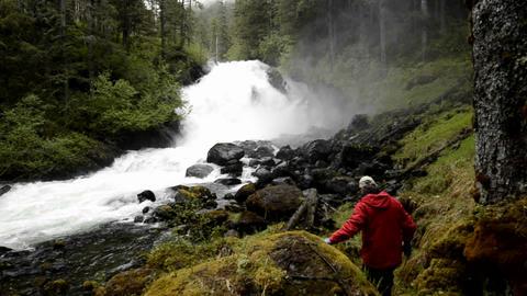 A tourist hiking through the rainforest to Cascade Footage