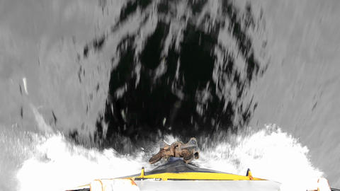 Dall porpoise riding the bow wake in Stephens Pass Stock Video Footage