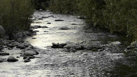 San Antonio Creek confluence on the Ventura River Stock Video Footage