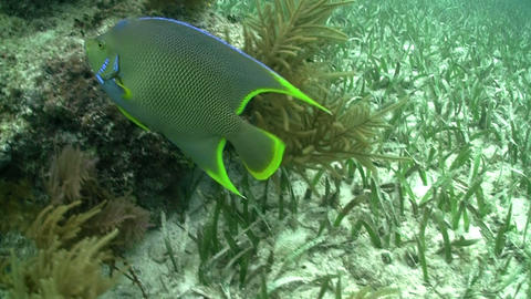 Underwater shots of tropical fish Stock Video Footage