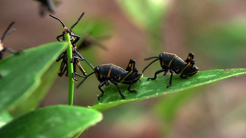 Black insects eat a green leaf Stock Video Footage