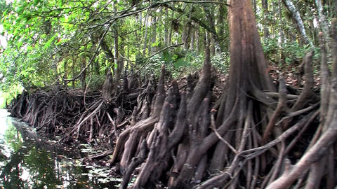 POV from a boat through the Florida Everglades Footage