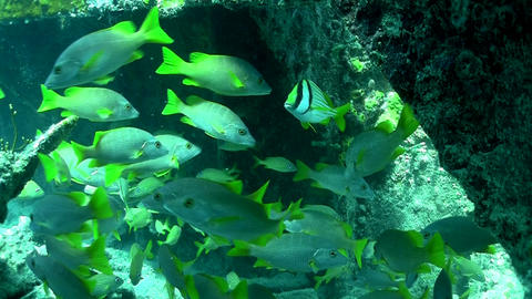Numerous tropical silver fish swim around a coral Stock Video Footage