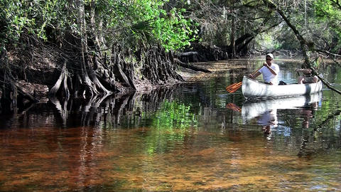 Two men row a canoe through the Florida Everglades Stock Video Footage