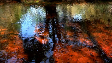 Beautiful reflections on the water of a swamp in t Footage